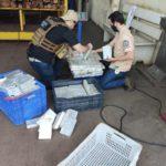 Polícia Civil incinera mais de 175kg de cocaína